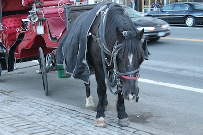 2012-02-14-NYCCarriageHorse.JPG