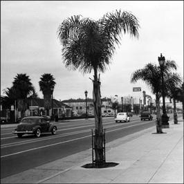 2012-02-14-tree.jpg