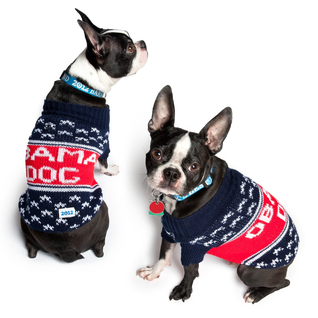 2012-02-17-ofaxxxx_obama_dog_sweater.jpg