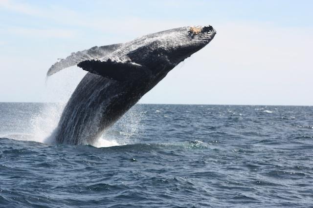 2012-02-21-WhaleBigIMG_9936.jpg