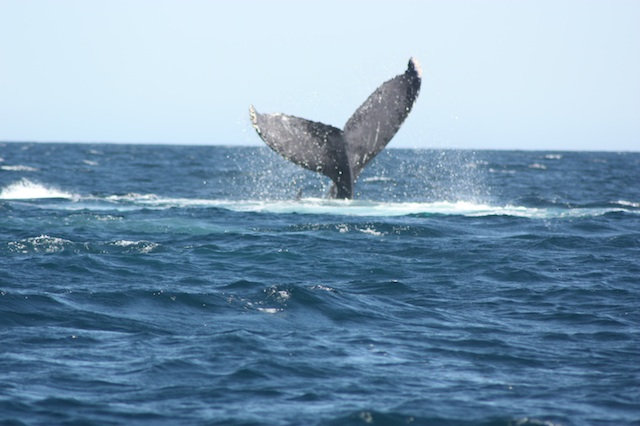 2012-02-21-WhaleTailIMG_9923.jpg