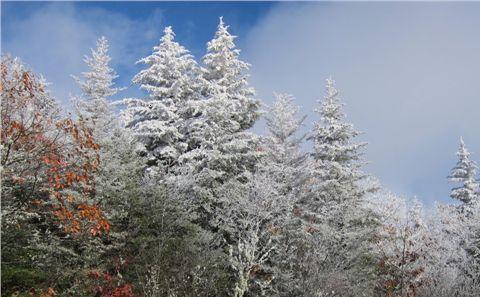 2012-02-22-images-sprucefir.jpg