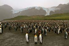 2012-02-24-penguins.jpg