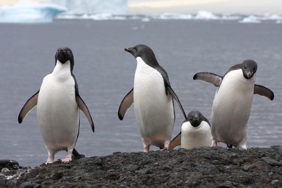 2012-02-27-Pingouins.jpg
