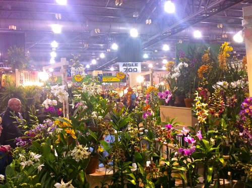 Images Visiting The 2012 Philadelphia International Flower Show (VIDEO) | HuffPost 1 flowers
