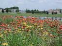 2012-03-12-flowerhouse3.JPG