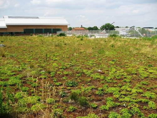 2012-03-16-GreenRoof_PaerdegatBasinCSOthumb500x3755866.jpg