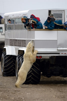 2012-03-16-polarbears_1735082_c.jpg