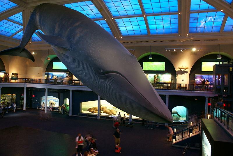 2012-03-26-Blue_Whale.JPG