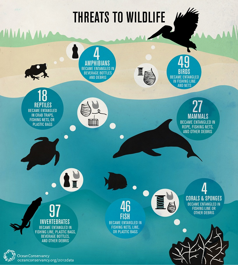 2012-03-28-wildlife.jpg