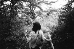 2012-04-02-forest_path.jpg