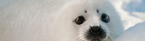 2012-04-17-sealbanner.jpg