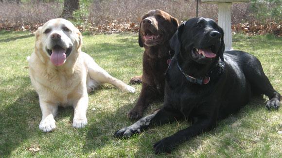 2012-04-18-3_dogs1.jpg