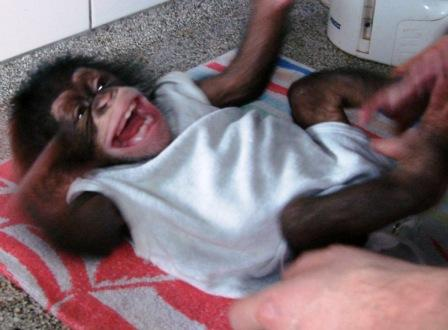 2012-04-18-MonkeyLaugh.jpeg