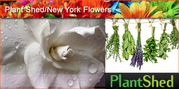 2012-04-29-PlantShedpanel1.jpg