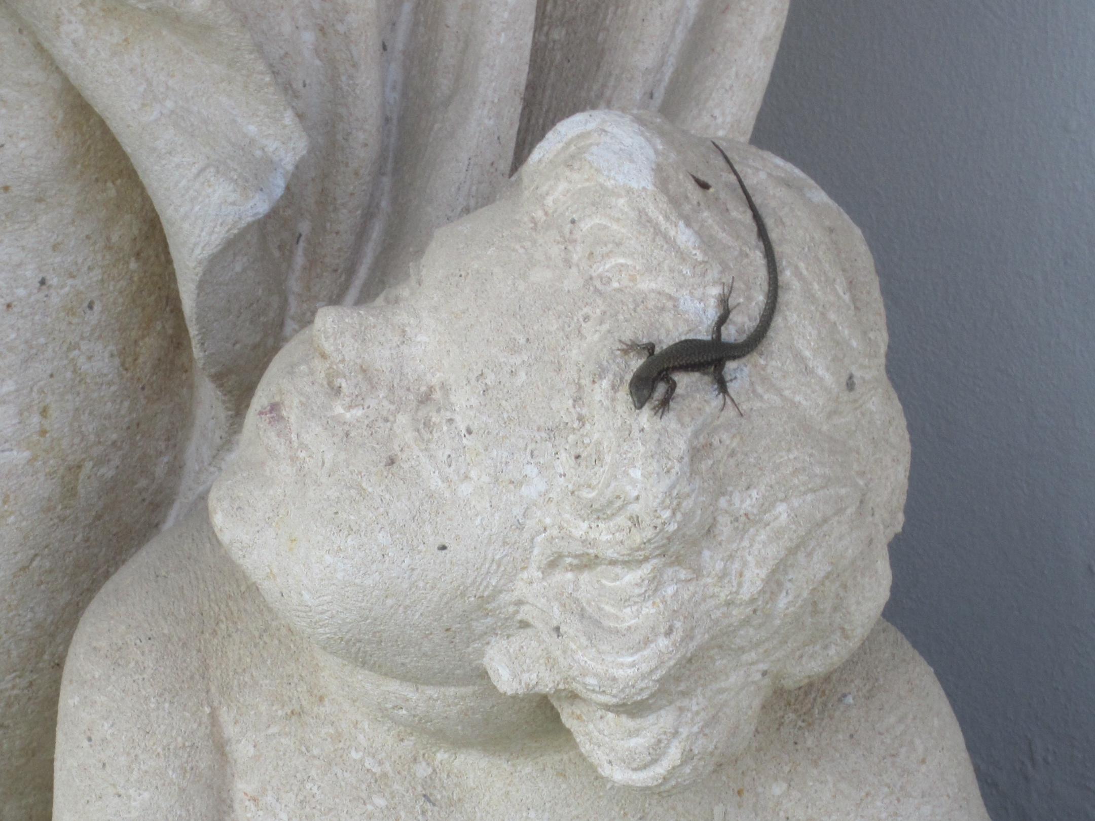 2012-05-01-Lizard.JPG