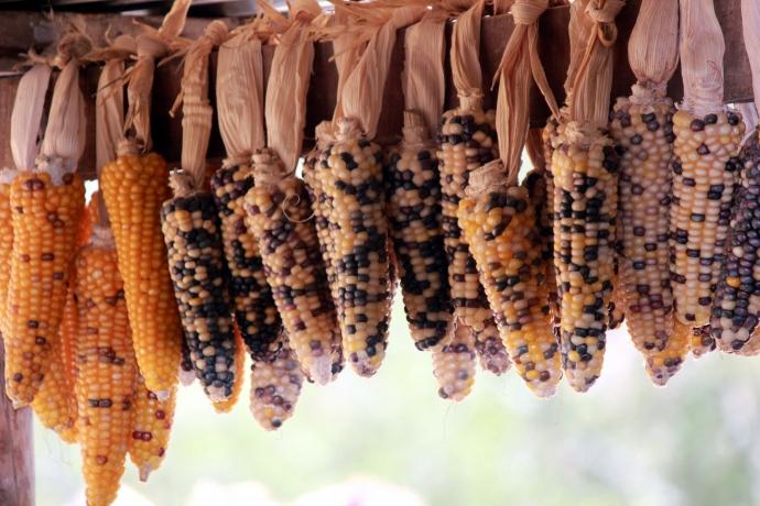 2012-05-01-corn.jpg