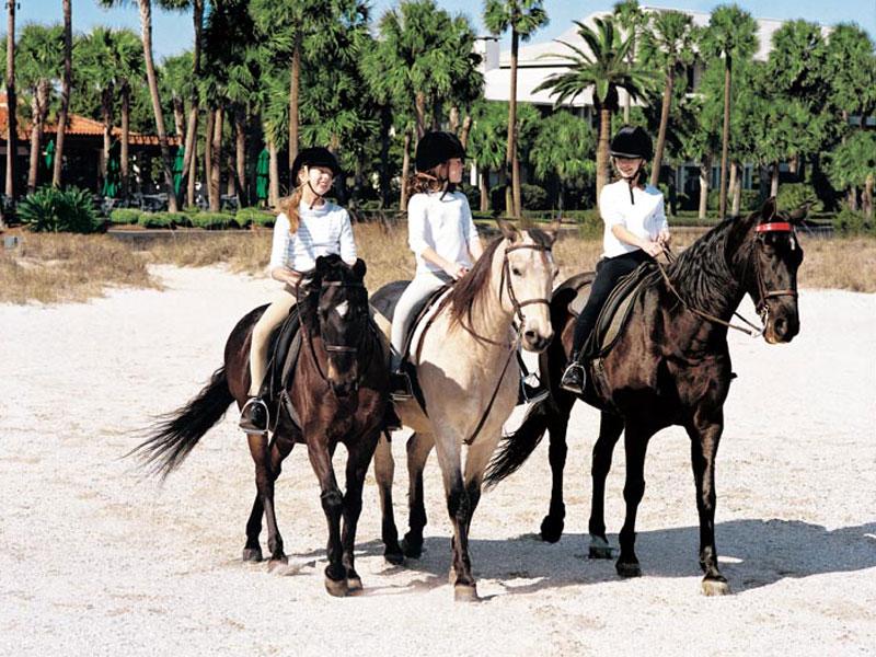 2012-05-02-1seaislandhorses