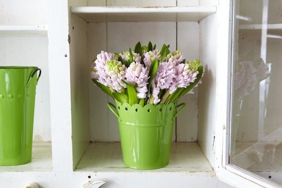 2012-05-02-Hyacinth_1139.jpg