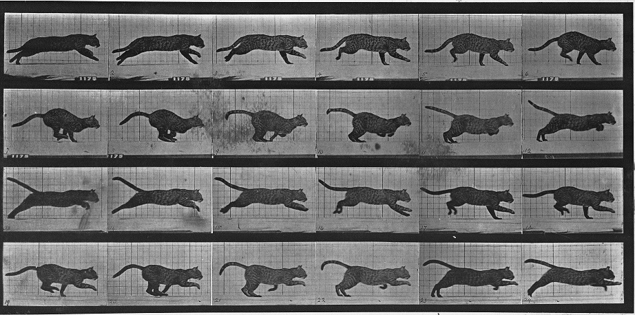 2012-05-07-hdmuybridge_animal_locomotion.jpg