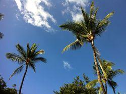 2012-05-10-Palmtrees.jpg