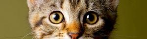 2012-05-10-kittenseason300cm051012.jpg