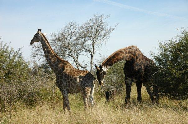 2012-05-15-safariwest.jpg
