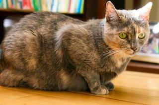 2012-05-18-cat1.jpg