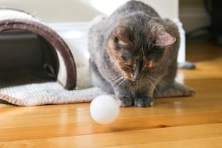 2012-05-18-cat2.jpg