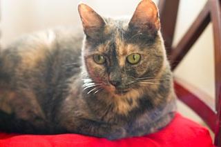 2012-05-18-cat3.jpg