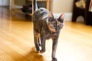 2012-05-18-cat5.jpg