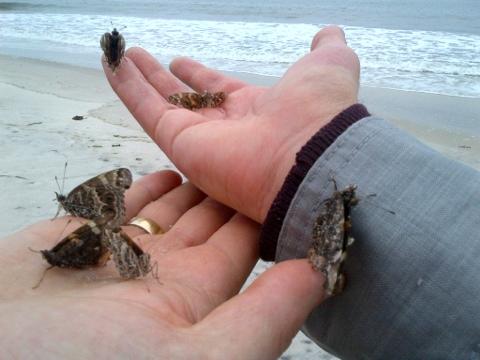 2012-06-05-butterflies1.jpg