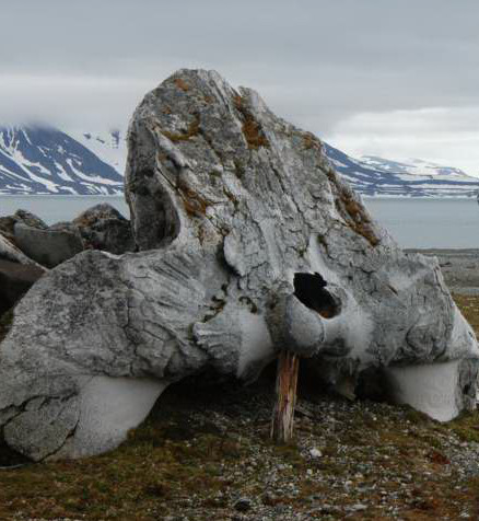 2012-06-05-whaleskullbyCarlSafina.JPG