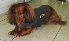 2012-06-07-RVRThundershirt.jpg