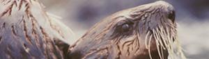 2012-06-14-beaverpull.jpg