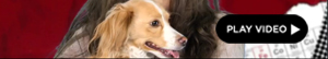2012-06-14-caradog.jpg
