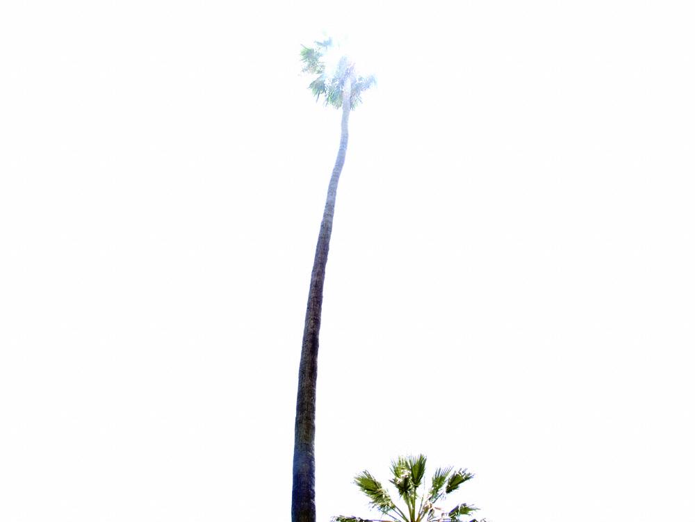 2012-06-14-palmtreeLoganPollard.jpg