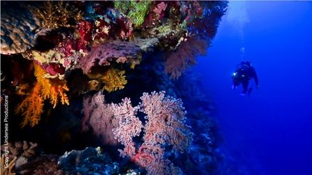 2012-06-21-osprey_reef_copyright_underseaproductions.jpg