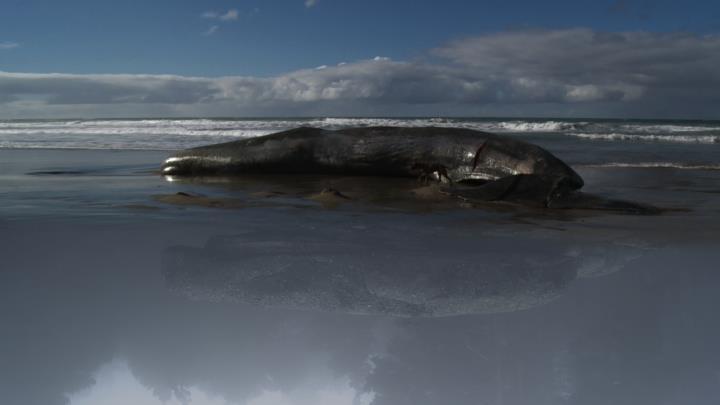2012-06-25-beachedwhale.jpg