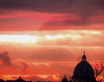 2012-06-27-oiseaux.jpg
