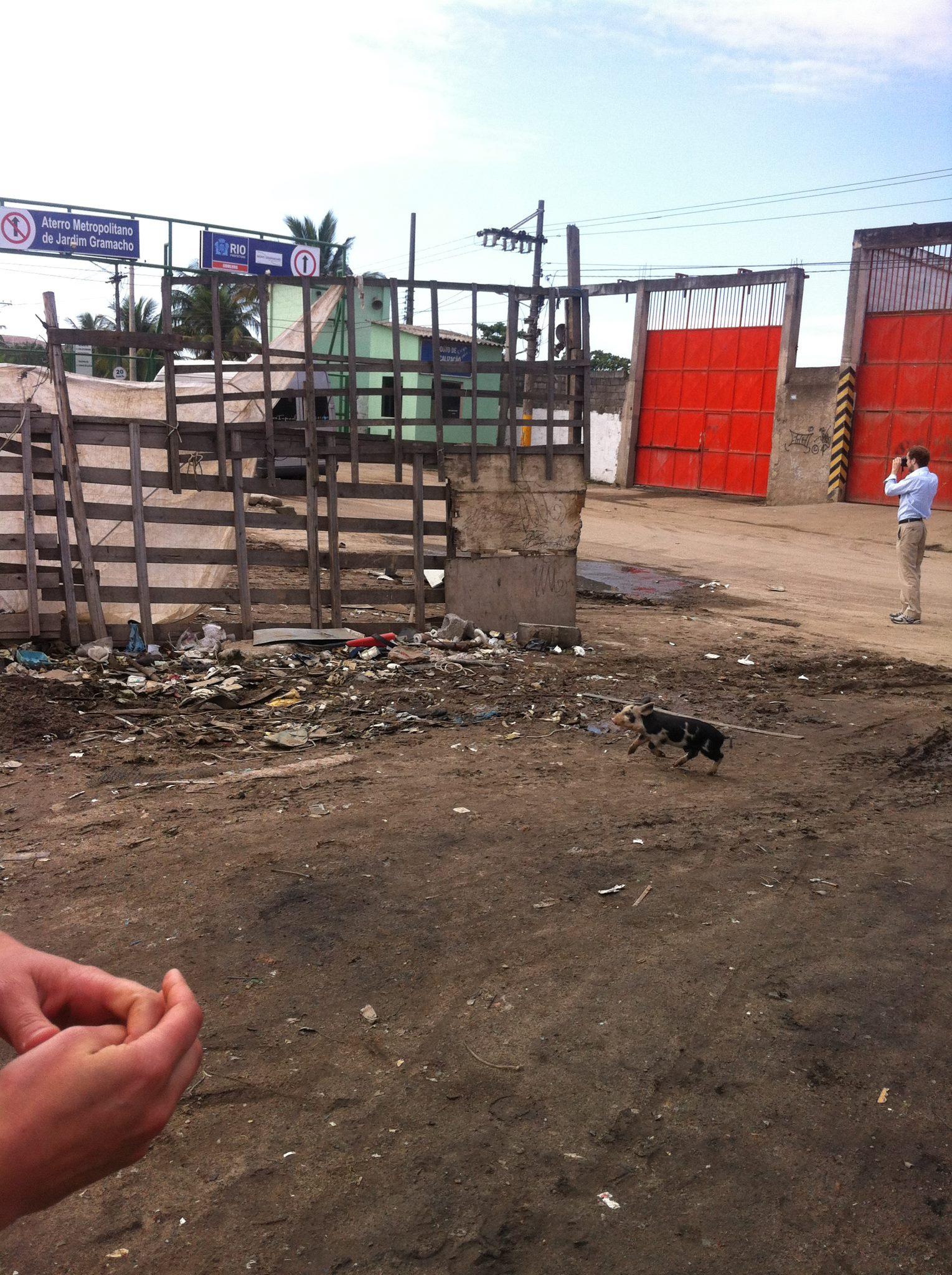 2012-06-28-PigletofJardimGramacho.jpg