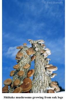 2012-06-28-mushrooms2.jpg