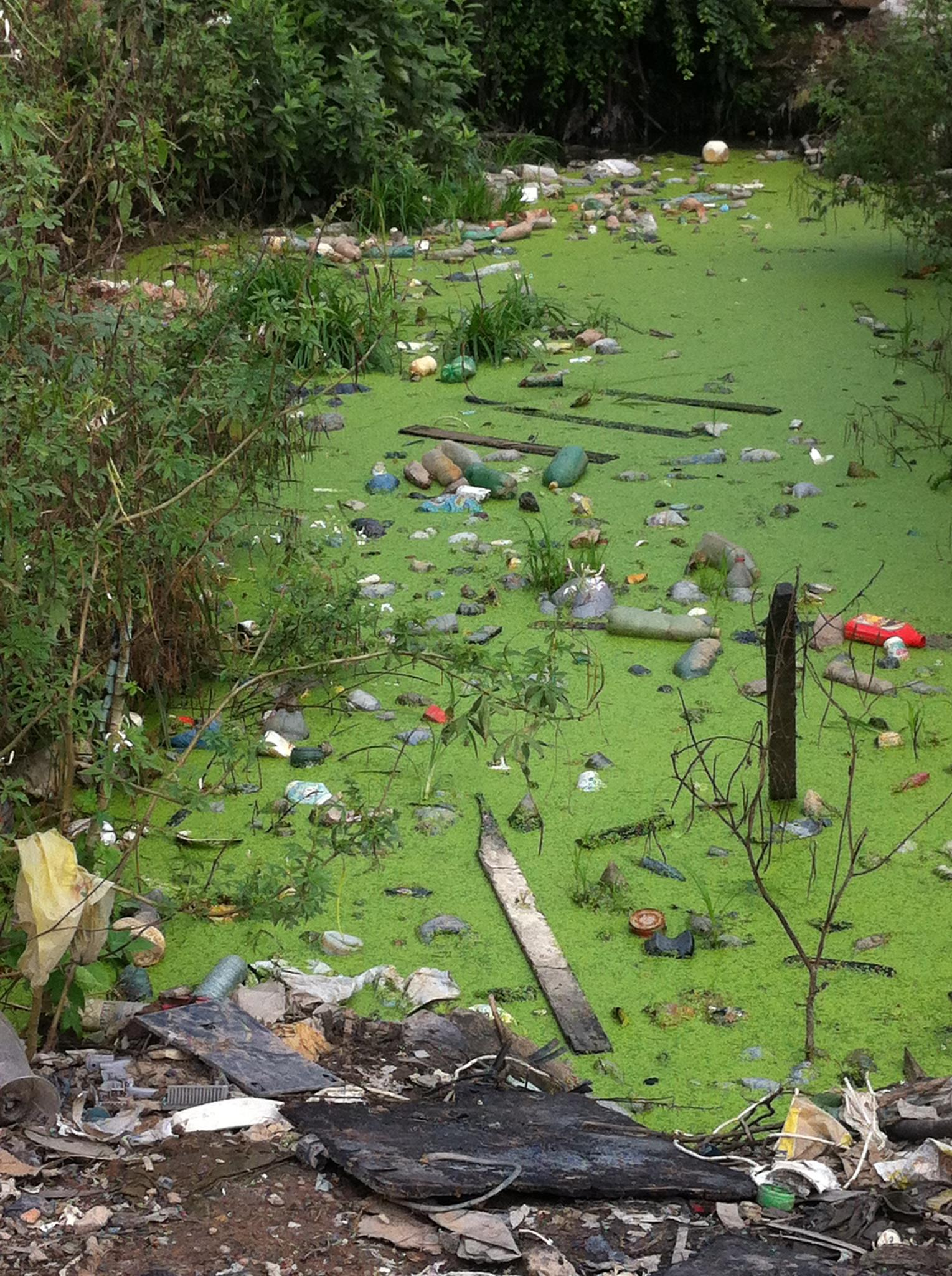 2012-06-29-JardimGramachoSwamp.jpg