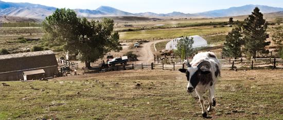 2012-07-02-Girlfarm.jpg
