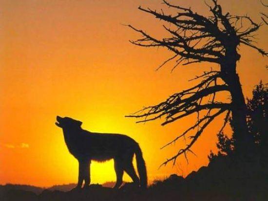 2012-07-02-howlingwolf2_opt.jpg