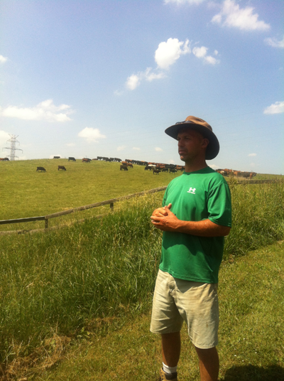 2012-07-03-cattle.png