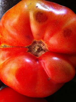 2012-07-10-AccidentalLocavoreTomatoCloseUp.JPG