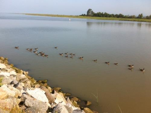 2012-07-12-ducks.JPG