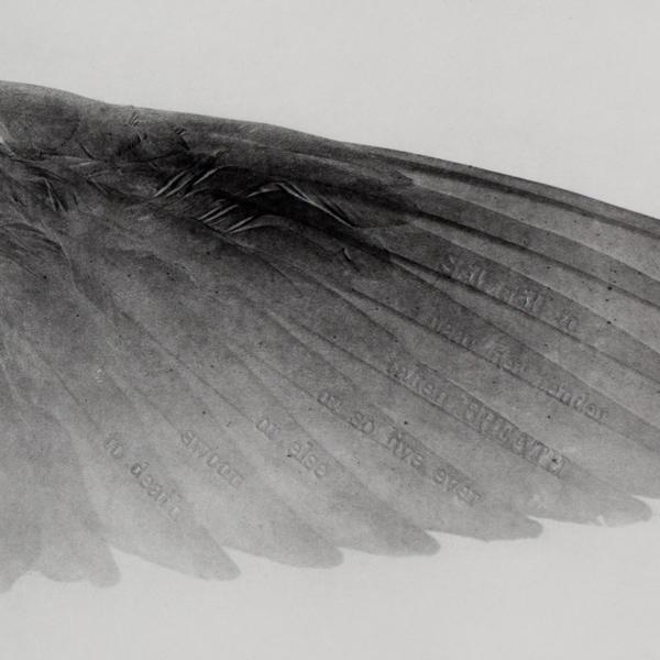 2012-07-15-kisa-lala-images-kiki-smith-ValerieHammond_Wings.jpg