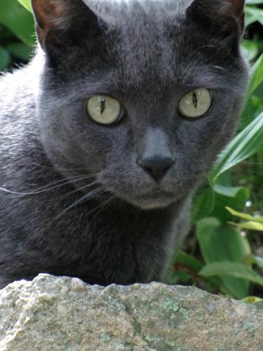 2012-07-16-Cat123.jpg